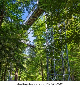 Treetop path through the mixed forest at the northern edge of the Harz, view from below to the supports and wooden planks.