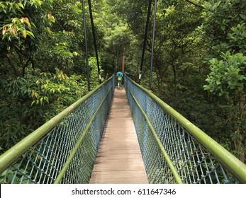 Treetop walk view at MacRitchie reservoir, Singapore