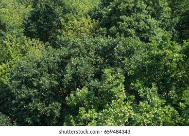 Treetops aerial top view green tree forest different species foliage background texture sustainable conservation