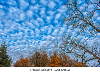 treetops in autumn and clouds in the sky