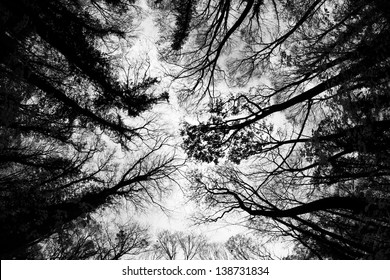 Treetops in autumn painting the sky. Low angle view / Tree Tops Pattern