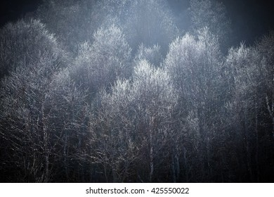 Treetops with back light