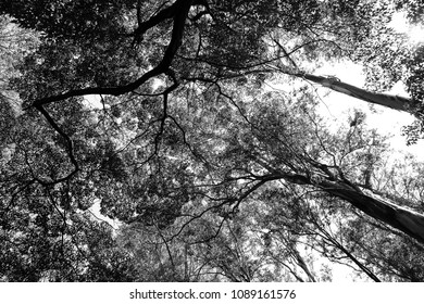 Treetops in contrast to the sky.