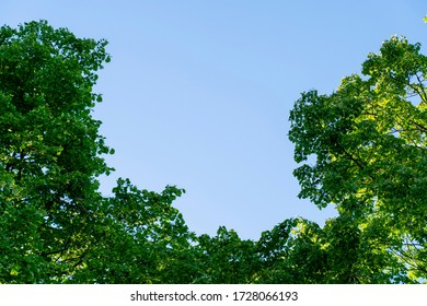 Treetops creating space in the middle of a photo with the sky.