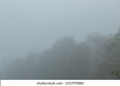 treetops in dense fog, landscape
