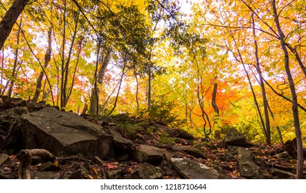 Treetops with a lot of different colors the ground full of big rocks. Photo taken from inside a beautiful forest during autumn 2018 in the Province of Quebec, Canada.