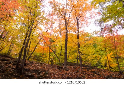 Treetops with a lot of different colors viewed from below. Photo taken from inside a beautiful forest during autumn 2018 in the Province of Quebec, Canada.