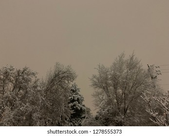 Treetops during snowstorm.