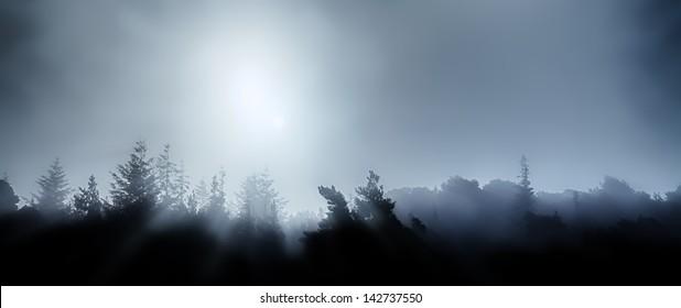 Treetops in foggy moonlight panorama