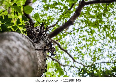 Treetops in the Forest, Green leaf on bright Background