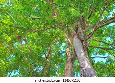 Treetops in garden on blue sky background