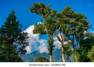 Treetops with green lush foliage on the background of blue sky. Botanical garden on Bali, Indonesia.