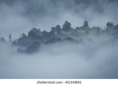Treetops on a hill surrounded by fog