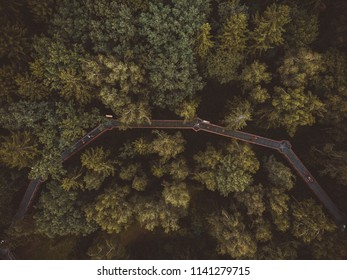 The Treetops walking path in Lithuania, located in the famous Anykščiai Pinewood is the only treetop path in Eastern Europe.