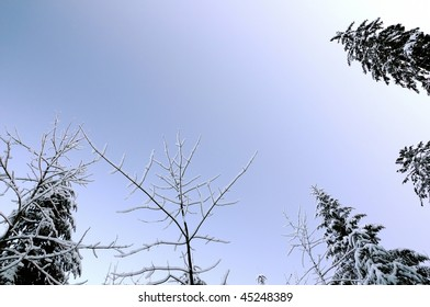 treetops in winter