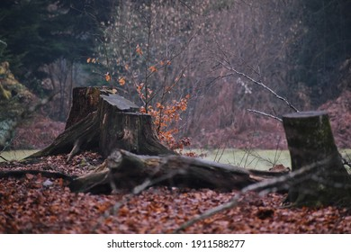 treetrunk in a winter forest
