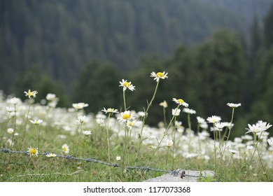 A trek to the hills of Dalhousie brings you to an area covered with flowers all around commonly referred to as 'The Valley of Flowers'! All along the trek these are visible creating a unique pattern!