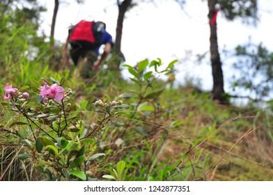 Treking on the mountain