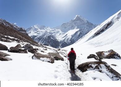 trekker Hiking to the mountains. Nepal, Himalayas, Annapurna Base Camp