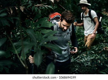 Trekking in a forest with friends