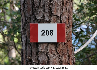 Trekking identification sign on a tree, marking the trail number 208, Elba island, Italy