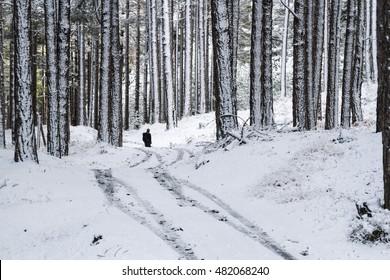 Trekking in snowy woods of Mount Etna