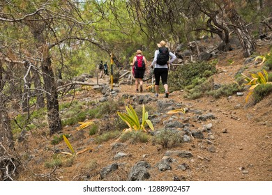 Trekking through pine tree forest  along coastline on e4 trail between Loutro and Agia Roumeli at south-west od Crete island, Greece