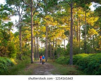 trekking Trail in Phu kradueng National park ,Loei , Thailand.
