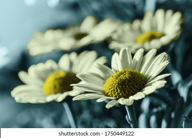 Trend colors 2020 in a flower composition