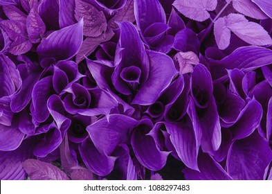 Trendy Color Cncept Set with Ultra Violet Color Trend of the Year 2018 Leaves Nature.