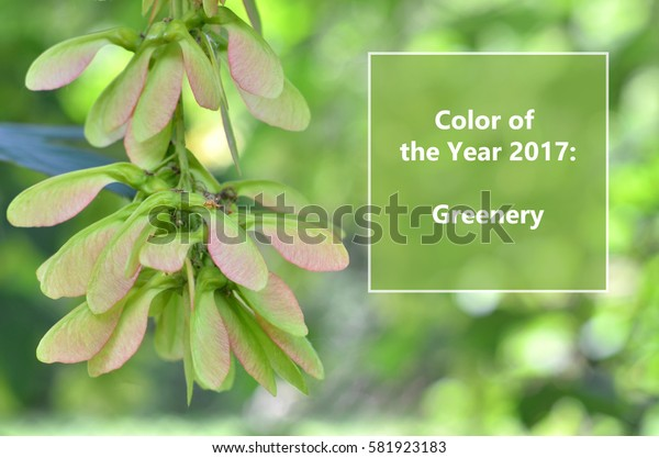 Trendy color concept.  Greenery is color of the year 2017  on nature background