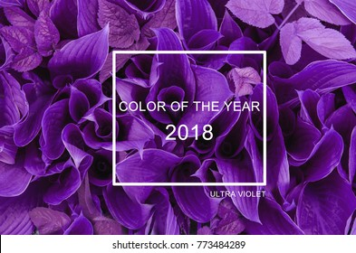 Trendy color concept of the year. Set with ultra violet color.