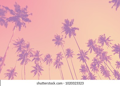 Trendy color toned palm trees on tropical beach