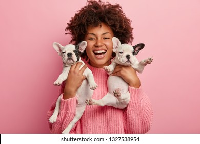Trendy pet concept. Satisfied dark skinned girl carries two small puppies near face, brings them to veterian clinic, wears pink sweater, isolated over rosy background, expresses sincere emotions