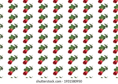 trendy red rose wallpaper pattern on a white background