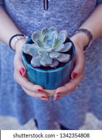 Trendy suculent plant