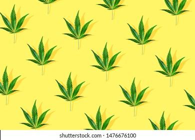 Trendy sunlight CBD pattern with green leaf cannabis on a light yellow background. Minimal CBD OIL concept