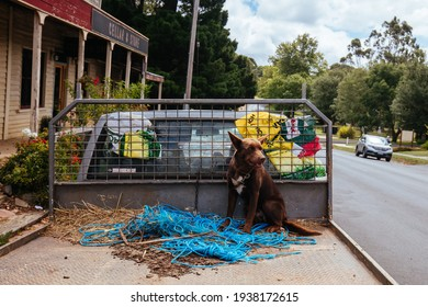 Trentham, Australia - February 22 2021: A dog sits on a ute tray in the rural town of Trentham on a cool summer's day in Victoria, Australia