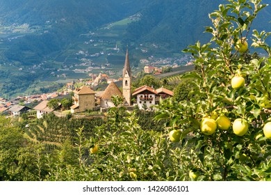 Trentino-Alto Adige, the Scena in South Tyrol,  a prime location on the slopes above the spa town of Merano.