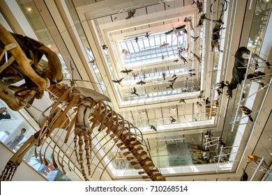 Trento, Italy, 14 Aug 2017 - Paleontology Museum of Natural History MuSe designed by Renzo Piano main lobby with embalmed animals and whalebone