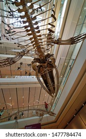 Trento/Italy - 08/04/2019: exposition of dinosaur skeletons and prehistoric animals inside the MUSE, the Science Museum of Trento,