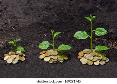 tress growing on coins / csr / sustainable development / economic growth