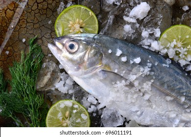 Trevally fish or jack frozen in ice with lemon and salt fresh from fishery market ready to cooking.