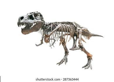 T-rex skeleton isolated on white background