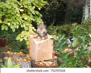 Trianguler Cut Tree trunk with Cat in the garden, Sacramento, California USA