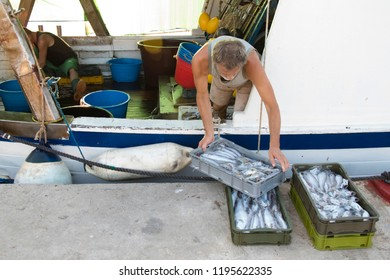 Tribunj, Croatia - August, 24, 2018: Two fishermen sorting out the catch on a deck of a moored trawler boat, in summer