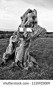 tribute to Ansel Adams, black and white artistic photograph of tree trunk eaten away by time,