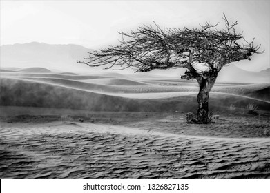 tribute to Ansel Adams, black and white artistic photography of desert landscape, tree designed by the wind