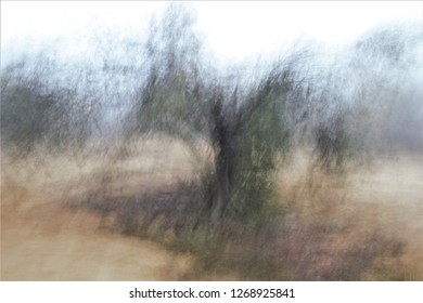Tribute to Ernst Hass, Tribute to Monet, impressionist photograph of the photographic sweeps of trees in the fog, at low shutter speed to give a mysterious atmosphere, olive trees, oaks, toledo, spain