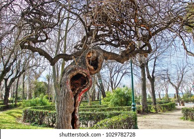 tribute to Van Gogh, allegory of madness, allegory of mental problems,allegory of pain, visual allegories, visual metaphors, photographic allegories, photographic metaphors,photography of twisted tree